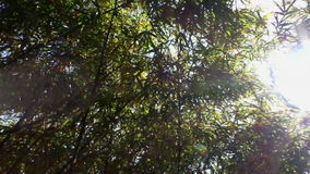 Tropical bushes and sun beams. Handheld above head shot while walking through tropical bamboo bushes, sun beams shine through foliage stock footage