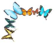 Tropical butterflies border Stock Photography