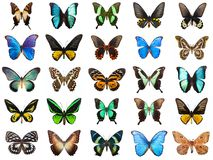 Tropical butterflies Royalty Free Stock Photos