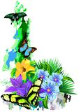 Tropical Butterflies in colors on a white background. (Vector) Stock Photos