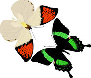 Tropical butterflies insects. Isolated on white background vector illustration