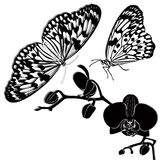 Tropical butterflies and orchids. Isolated on white background stock illustration