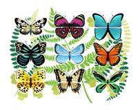 Tropical Butterflies Species Illustrations Set Royalty Free Stock Image