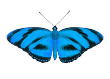 Tropical butterfly Stock Image