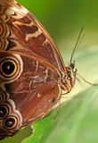 Tropical butterfly royalty free stock photos