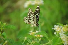 A tropical Butterfly. Beautiful butterfly in the garden Stock Photography
