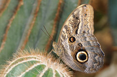 Tropical butterfly on cactus Stock Photo