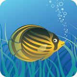 Tropical butterfly fish under water. Yellow striped tropical butterfly fish on the blue underwater background with seaweed Stock Photo