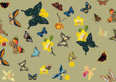Tropical butterfly and flower background Stock Images