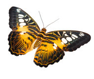 Tropical butterfly Stock Photo