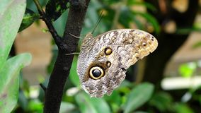 Tropical butterfly stock video footage