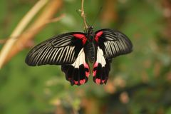 Tropical butterfly resting Stock Images