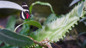 Tropical Butterfly is resting  at plant Stock Photography