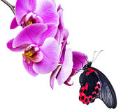 Tropical butterfly Stock Images