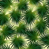 Tropical cabbage palm leaf in a seamless pattern Stock Photography