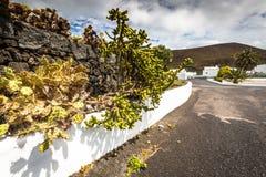 Tropical cactus garden in Guatiza village, Lanzarote, Canary Isl Royalty Free Stock Photos