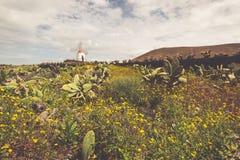 Tropical cactus garden in Guatiza village, Lanzarote, Canary Isl Stock Photography