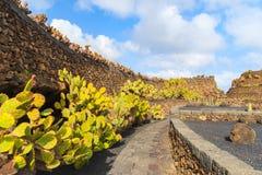 Tropical cactus garden. In Guatiza village, Lanzarote, Canary Islands, Spain Royalty Free Stock Photo