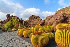 Tropical cactus garden Royalty Free Stock Photo