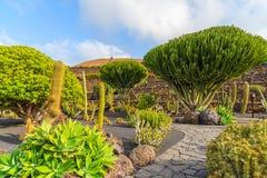 Tropical cactus garden Stock Image