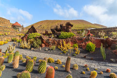 Tropical cactus garden Royalty Free Stock Images