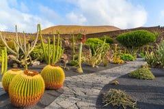 Tropical cactus garden Stock Photo
