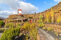 Tropical cactus garden Stock Photos