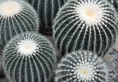 Tropical cactus Stock Photo