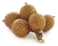 Tropical Calamus palm fruits Royalty Free Stock Image