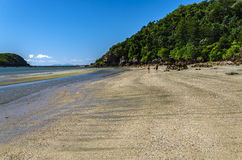 Tropical Cape Hillsborough National Park Royalty Free Stock Images