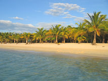 Tropical caraibe beach Royalty Free Stock Photo