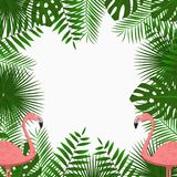 Tropical card, poster or banner template with jungle palm tree leaves and pink flamingo birds. Exotic background. Vector. Tropical card, poster or banner Stock Photos