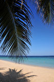 Tropical Caribbean beach. Bright sun, warm sandy beach, blue water and palm fronds on a tropical Caribbean beach Stock Images