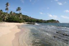 Tropical Caribbean beach, Bequia. Natural tropical Caribbean beach, Bequia. Windswept palms line an empty beach stock images