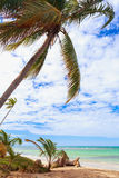 Tropical caribbean beach with palm tree above the sea. Incredible empty tropical caribbean beach with palm tree above the sea. Vacation concept. Dominican Royalty Free Stock Photos