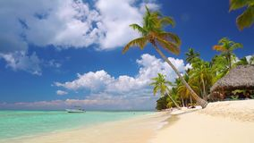 Tropical caribbean island. Beautiful beach, palm trees and clear sea water stock footage