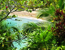 Tropical Caribbean Paradise, Honduras. A secluded beach with turquoise waters is seen through the tropical plants in the lush jungle paradise of the island of royalty free stock image