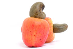 Tropical Cashew Royalty Free Stock Photo