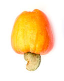 Tropical Cashew fruits Royalty Free Stock Photography
