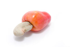 Tropical Cashew fruits Stock Images