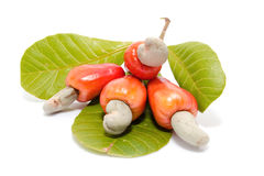 Tropical Cashew fruits Stock Photo