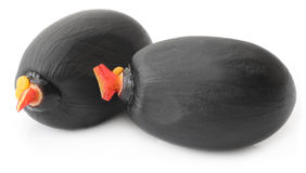 Tropical chestnut Stock Photo