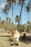 Tropical chicken Stock Photo