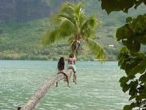 Tropical Children. Moorean Children on Palm Tree royalty free stock photo