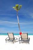 Tropical christmas Stock Photography