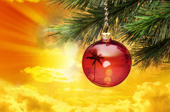 Tropical Christmas Palm Tree Stock Images
