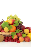 Tropical, Citrus and Berry Fruit Stock Photography