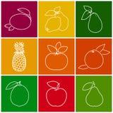 Tropical Citrus Fruit Linear Icons Stock Photo