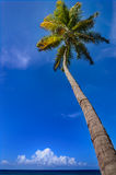 Tropical climate. Palm tree sea and blue sky. Stock Images