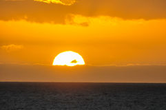 Tropical  Clorful Sunset Royalty Free Stock Photography
